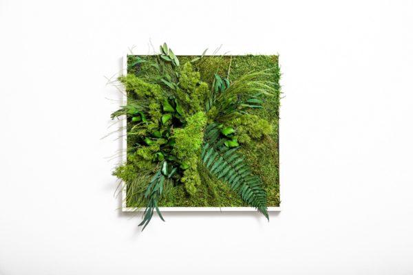 plochy-mach-rastliny-greenin