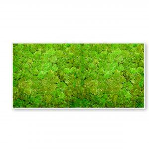 machovyobraz_greenin_hill_40x80