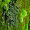 machovy-obraz-greenin-leafy-detail