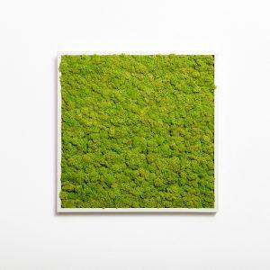 machovy-obraz-greenin-soft