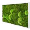 machovy-obraz-greenin-wood-40x80