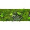 machovyobraz_greenin_leafy_40x120_01