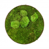 machovy-obraz-kruh-greenin-wood-40