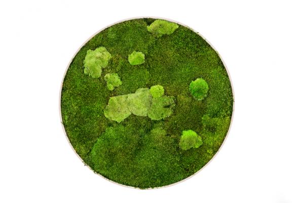 machovy-obraz-kruh-greenin-wood-80