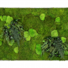 machovyobraz_greenin_leafy_80x120